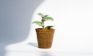 zero waste problem recycle waste management greener healthier lifestyle